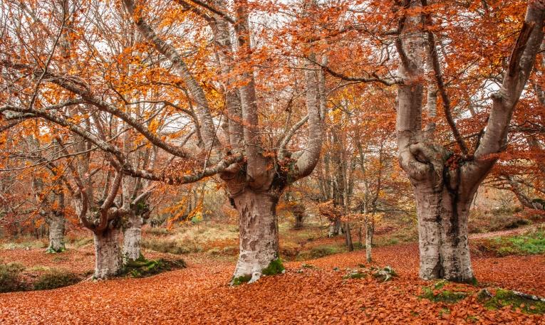 paso al otoño